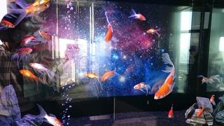 宇宙金魚 (1).JPG