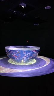 宇宙金魚 (2).JPG
