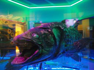 深海3.jpg