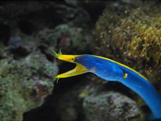 深海4.jpg