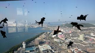 空飛ぶ出目金.JPG